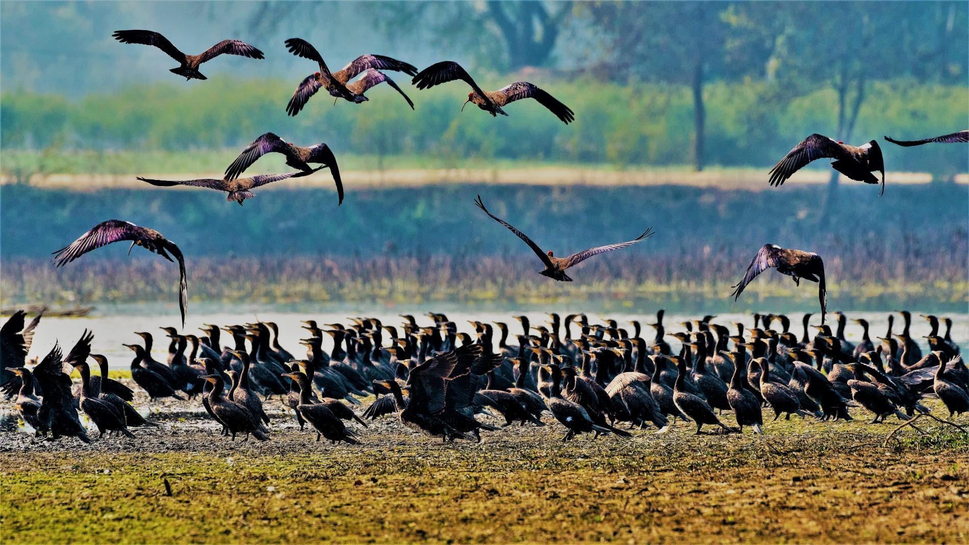 Samsara-Safari-Slider-birds